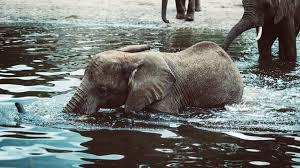 what does an elephant say u2013 words for life u2013 medium
