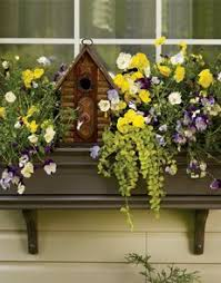 Window Boxes Planters by Best 25 Window Boxes Summer Ideas On Pinterest Outdoor Flower