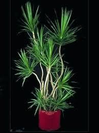 good houseplants for low light low light indoor plants interior ezpass club
