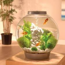 How To Make Fish Tank Decorations At Home Best 25 Fish Tanks Ideas On Pinterest Fish Tank Amazing Fish