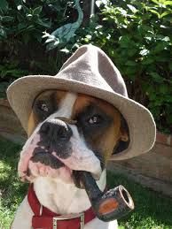 boxer dog funny 1565 best i love my boxer dogs images on pinterest boxer love