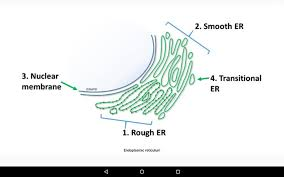 cell biology 101 android apps on google play