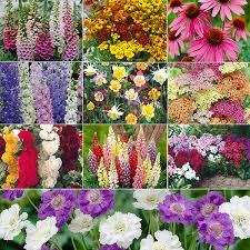 cottage garden plants butterfly garden pacific nw pinterest