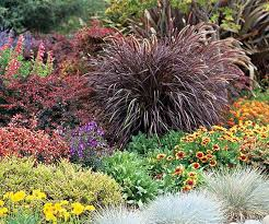 18 best ornamental grasses images on front yard