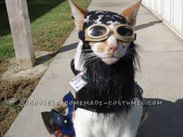 Pet Cat Halloween Costumes 158 Best Pet Halloween Costumes Images On Pinterest Homemade