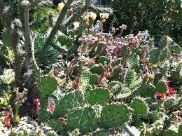 cactus garden design ideas photos 18 excellent cactus garden