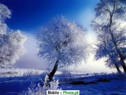 beautiful white tree wallpapers mobile pics