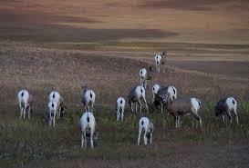South Dakota wildlife tours images South dakota photo tour great photography landscapes jpg