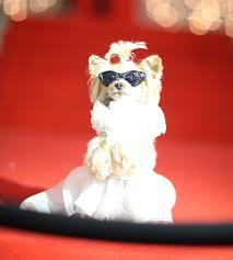 Dog Wedding Dress Little Lola Sunshine Wedding Dress Photos