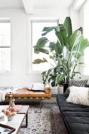 apartment plants large indoor trees that make a bold statement big plants drama