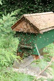 80 best backyard bees top bar hives images on pinterest bee