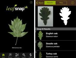 launches tree identification app