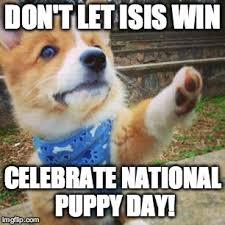 puppy corgi meme generator imgflip