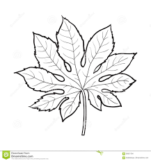 full leaf of fatsia japonica palm tree sketch vector illustration
