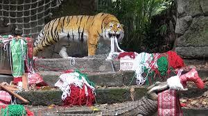 When Do Christmas Decorations Go Up At Disneyland Jingle Cruise 2015 Full Ride At Disneyland Jungle Cruise Holiday