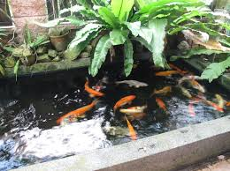 Building A Fish Pond In Your Backyard by 192 Best Fish And Garden Ponds Images On Pinterest Backyard