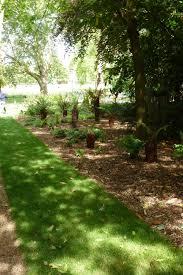 planting a native hedge nature u2014 peckham rye park
