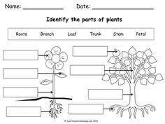 parts of a tree worksheet freebie visit www littlelearninglane