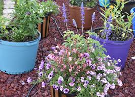 container gardening container gardening solves several landscape problems