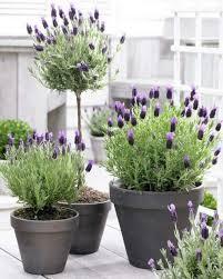 amenager balcon pas cher plantes déco et aménagement balcon u2013 30 idées fraîches buis