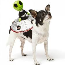 Doggy Halloween Costumes Hottest Pet Halloween Costumes Family Circle