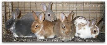 rabbit bunny baby rabbits time to sell buy and then provide bunny rabbit care