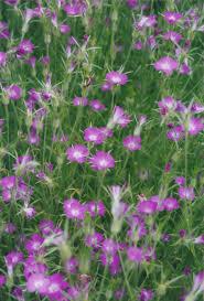 fleurs vivaces rustiques fleurs vivaces faciles d u0027entretien pour le jardin