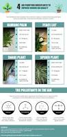 indoor plants air purifier air purifiers