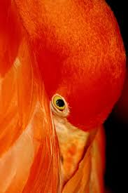 si e social d orange vibrant orange color orange bird beautiful birds