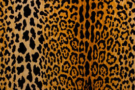 Animal Print Bathroom Ideas Luminous Nails February Pretty Coral Leopard Print With Crystals