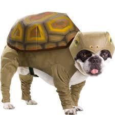 Funny Dog Costumes Halloween 29 Dog Costumes Halloween Images Animals