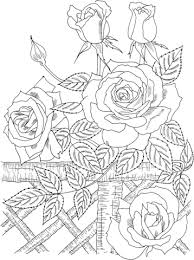america u0027 climbing rose coloring free printable coloring pages
