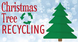 pasadena now make tree recycling a tradition
