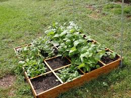 pretty small vegetable garden design for beginners with flower