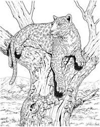 coloring pages of tigers hard owl coloring pages tiger liked wild cat in the wild