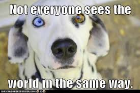 Cute Pet Memes - cute dog meme lauren trimble homeopathy blog