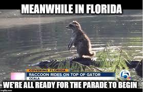 Florida Gator Memes - meanwhile in florida 2 imgflip