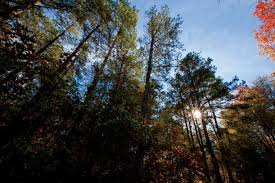 Arkansas Forest images Arkansas forestry commission protects state forests farm flavor jpg