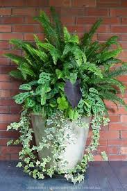 Plants For Patios In The Shade Best Foliage Plants For Containers Landscapes Pinterest