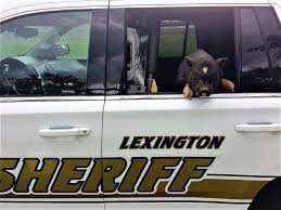 columbia thanksgiving break lexington county sheriff u0027s department archives coladaily com