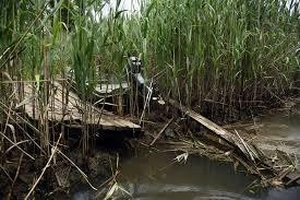 inside the fight to save gabler u0027s creek a hidden queens waterway