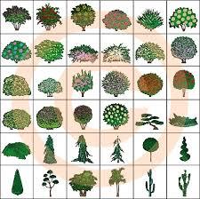 landscape design symbols ornamental shrubs color plans