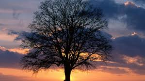 sunset alone wallpapers alone tree at sunset hd wallpapers