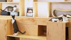how to design furniture how to design the purrfect cat cafe