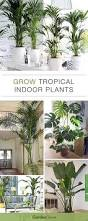 Tropical Potted Plants Outdoor - best 25 tropical house plants ideas on pinterest palm house