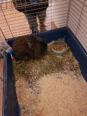 australian shepherd zu verschenken tiermarkt zu verschenken in wuppertal u2013 tiere bei kalaydo de