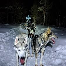 dog sledding for beginners how to be a musher for a day trip