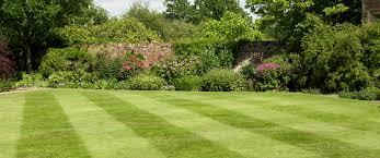 lawn care innovative landscape service