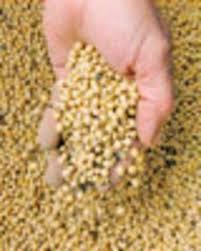 Monsanto Vanity Fair Monsanto U0027s Harvest Of Fear Democracy Now