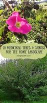 Home Landscape 165 Best Medicinal Gardening Images On Pinterest Healing Herbs
